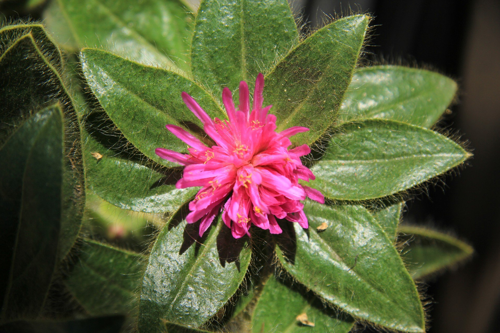 Plant Paparazzi: Making Friends with your Camera & Lens