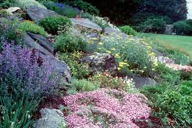 Planning & Planting Your Hillside Home