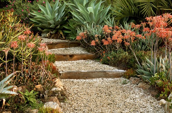 Year-Round Color in Your Garden