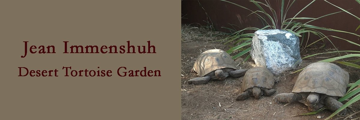California Desert Tortoises The Water Conservation Garden The