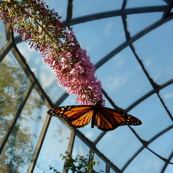 Butterfly on blossom in butterfly pavilion