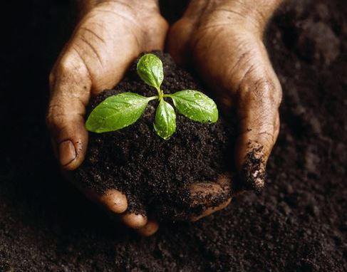 LANDSCAPES - Irrigation 101 & Soils