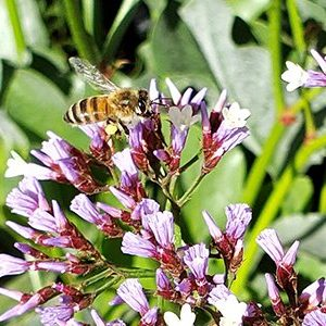 Nature Therapy Video Thumbnail - Bee pollinating