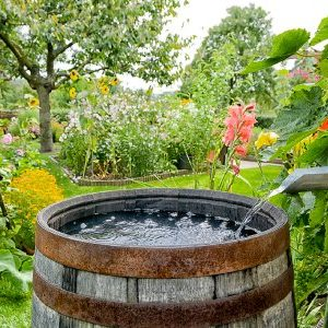 Water Harvesting Barrel