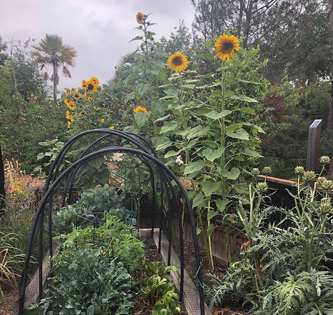 Docent Training - In Person at The Garden
